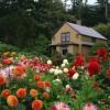 Bahçe Mobilyalarına Yakışan Çiçekler!