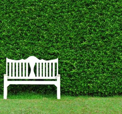 Bahçe Dizaynında Sıkça Yapılan Hatalar
