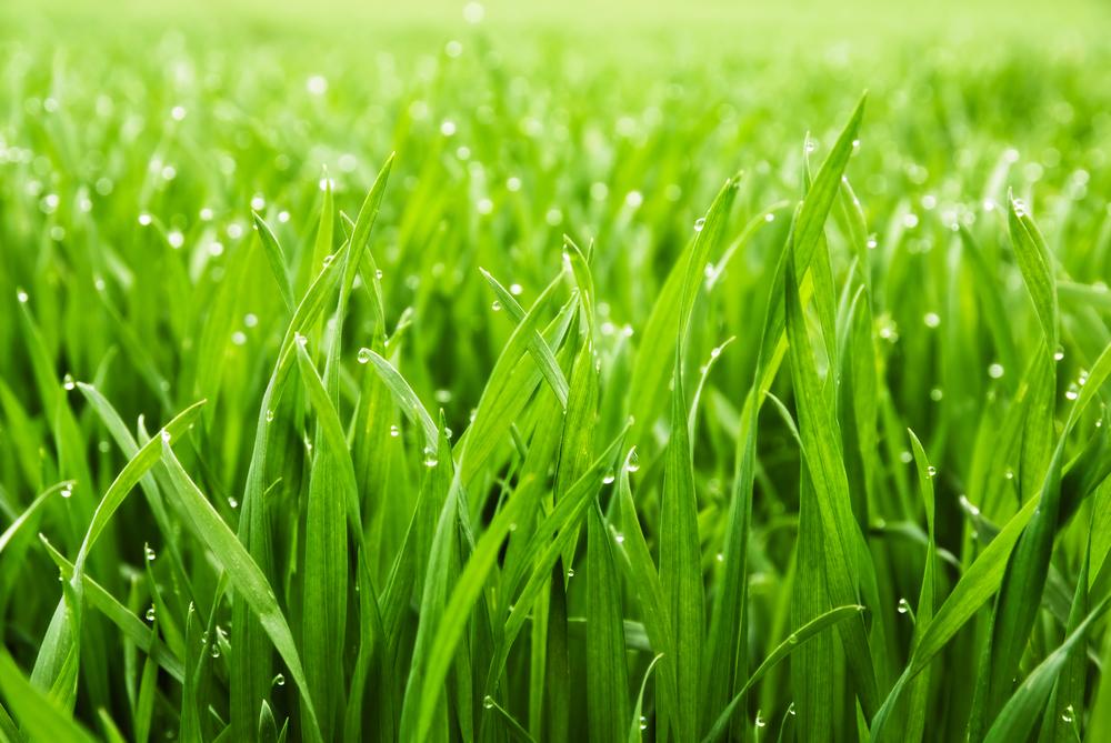çim bakımı 2